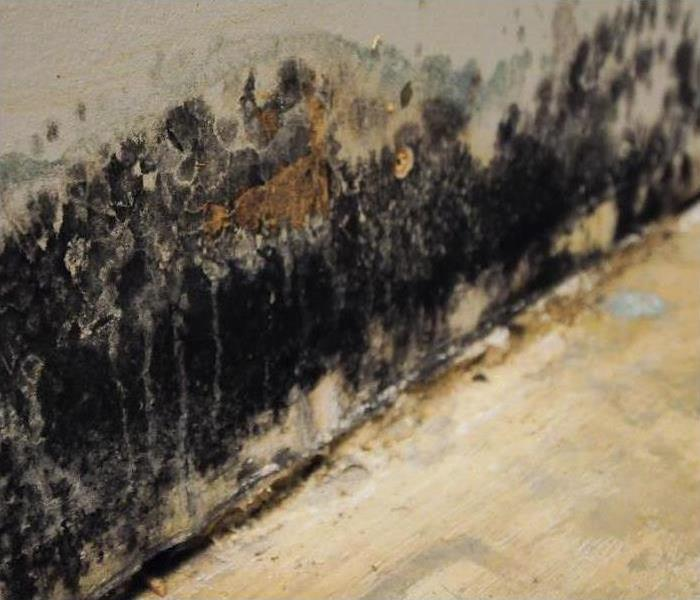 Extensive black mold growth on a wall