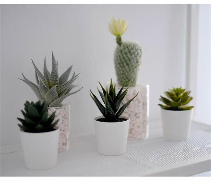 Potted cactus house plants on white shelf with white wall.